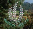 Walton Heath Golf Club - Old Course