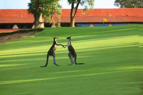GOLFSelect Golf Travel - Australia