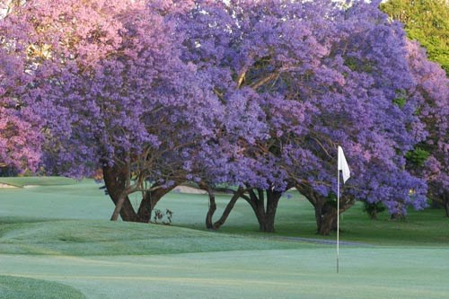 Indooroopilly Golf Club (Captains Course)